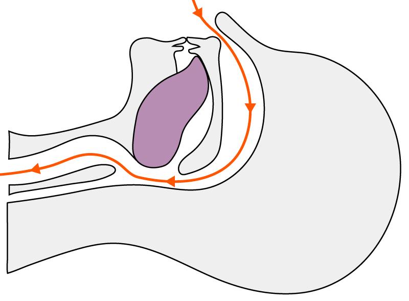 鼻呼吸時の舌の正常な位置